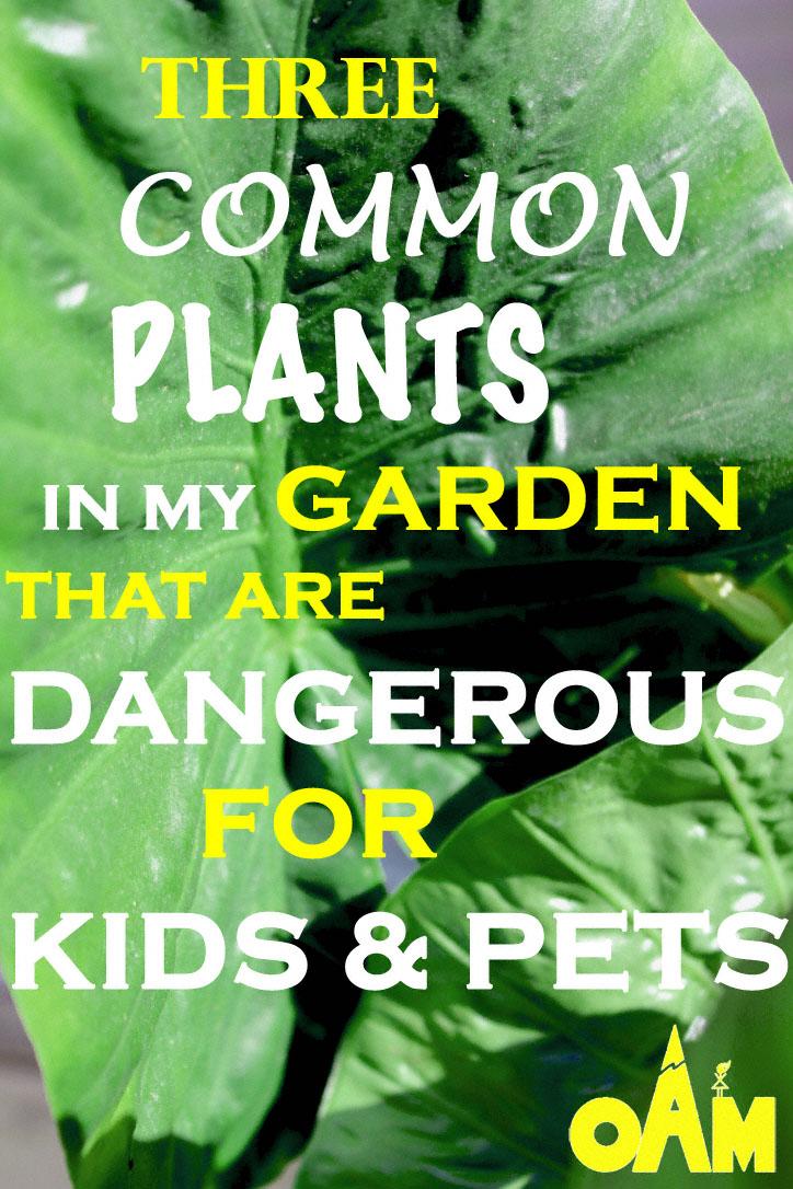 openairmomthreecommonplants